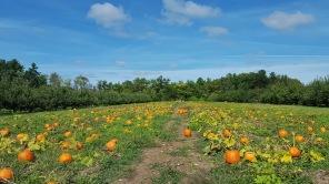 7 Activities to Celebrate Autumn