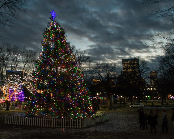 Photo 8: Boston Common Tree with Boston skyline
