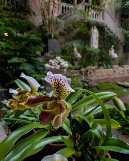 Level one - Isabella Stewart Gardner Flower in Courtyard