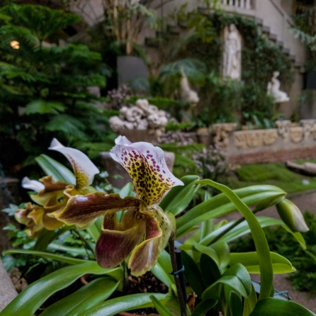Level one - Isabella Stewart Gardner Flower in Courtyard