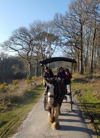 Jaunting Cart, Killarney National Park - County Kerry Ireland