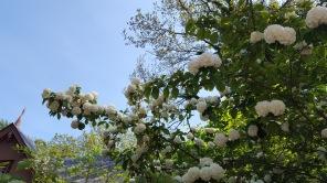 Cliff Walk - Flowers