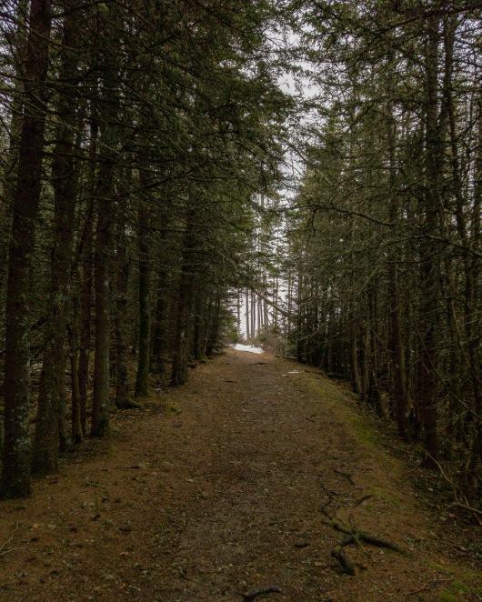 Wonderland - Acadia National Park, Maine