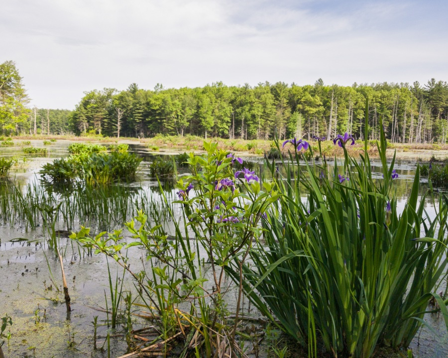 Assabet National Wildlife Refuge