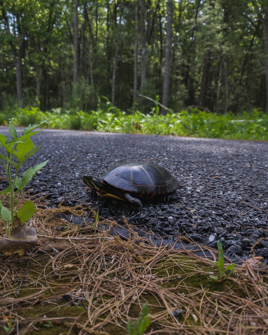 Assabet National Wildlife Refuge