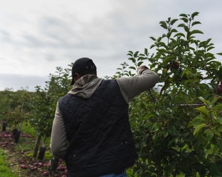 Favorite Fall Activity - apple picking in massachusetts, belkin family lookout farm