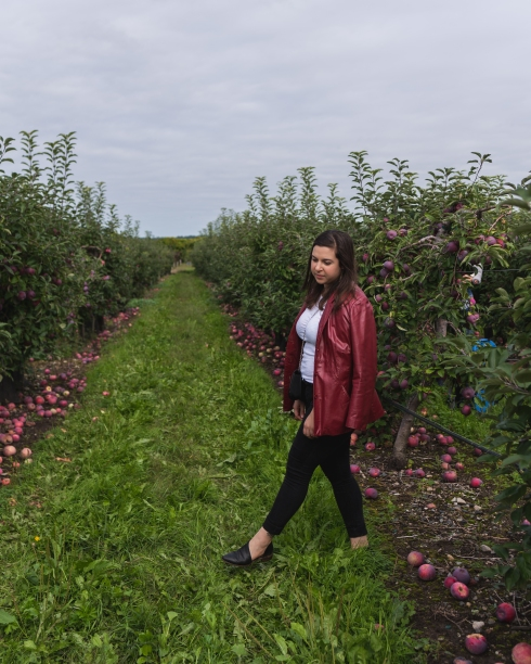 Favorite Fall Activity - apple picking in massachusetts, belkin family lookout farm