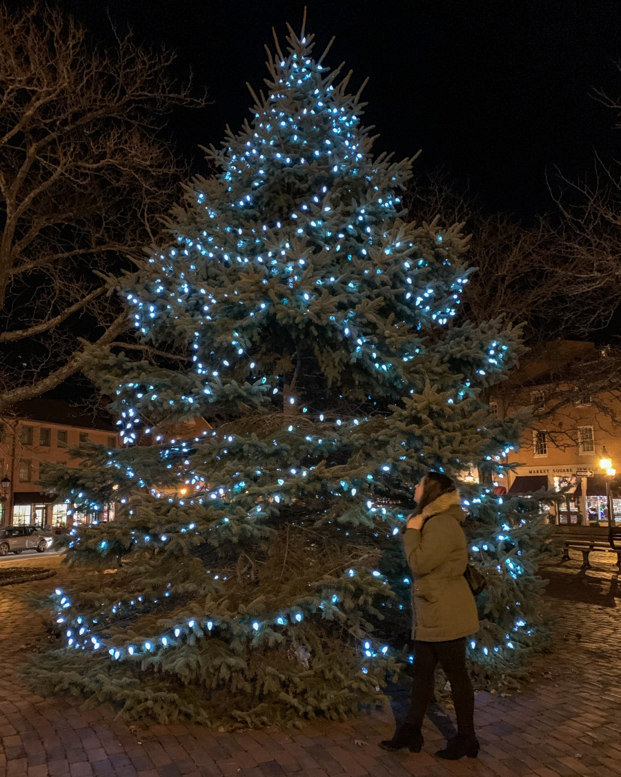 Newburyport Tree