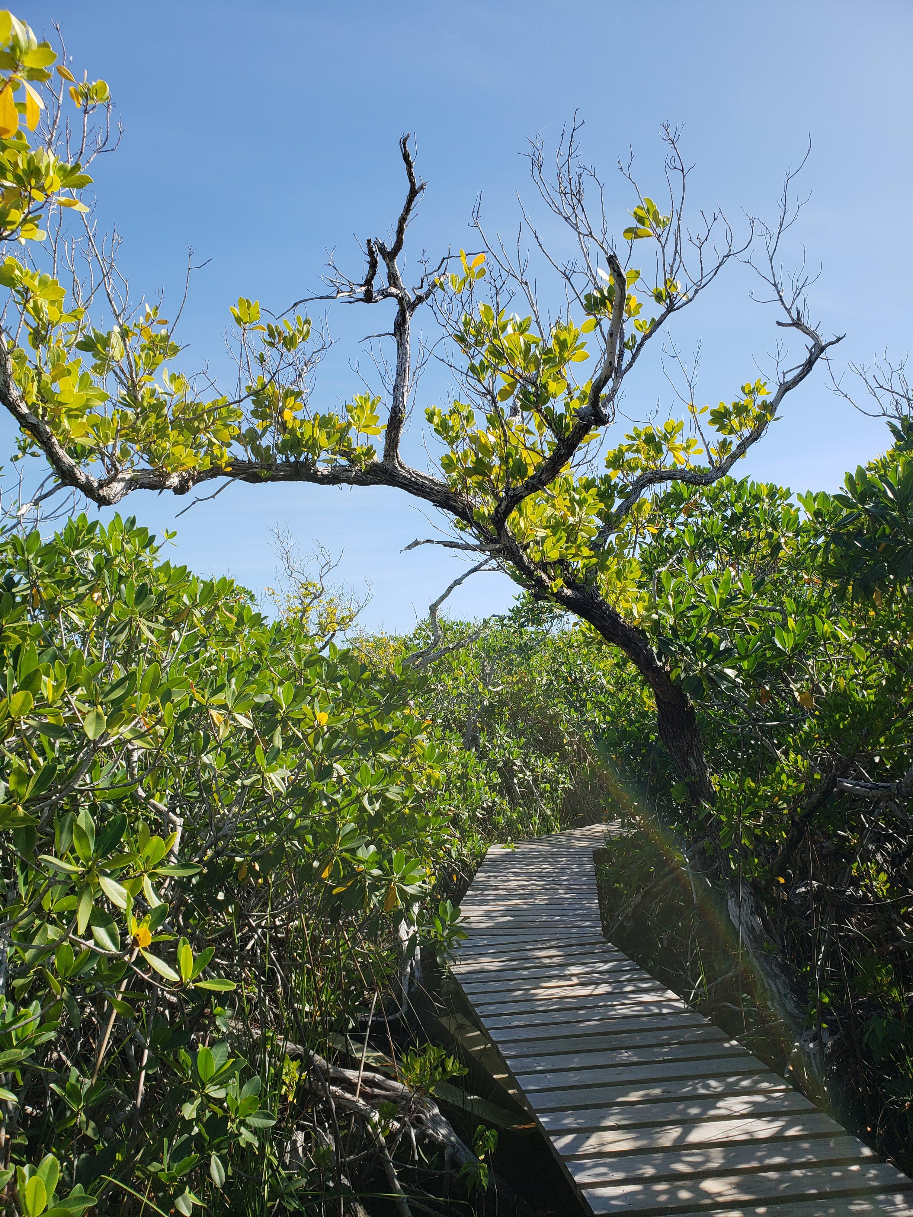 Lucaya National Park Grand Bahama Bahamas