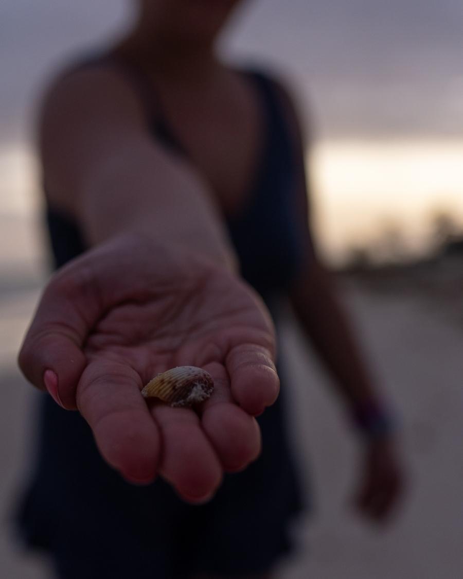 Shell at Taino Beach Freeport Bahamas
