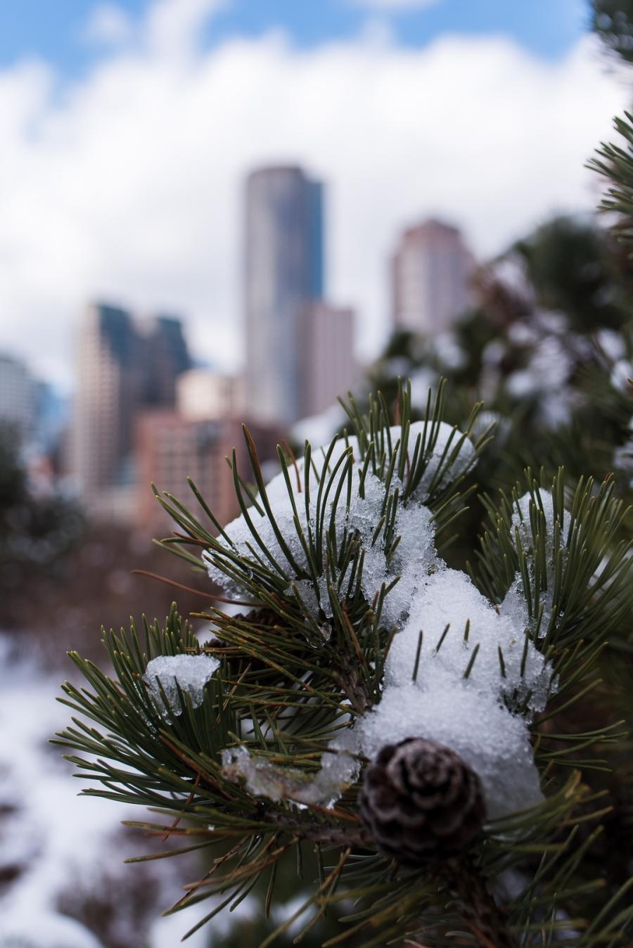 snowy winter fun in boston and watertown