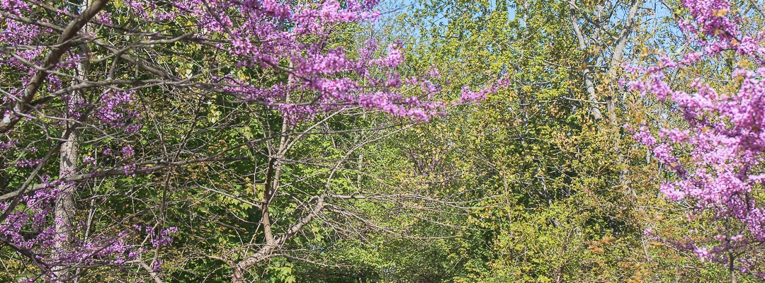 Spring photography -- Watertown, MA; Newton, MA