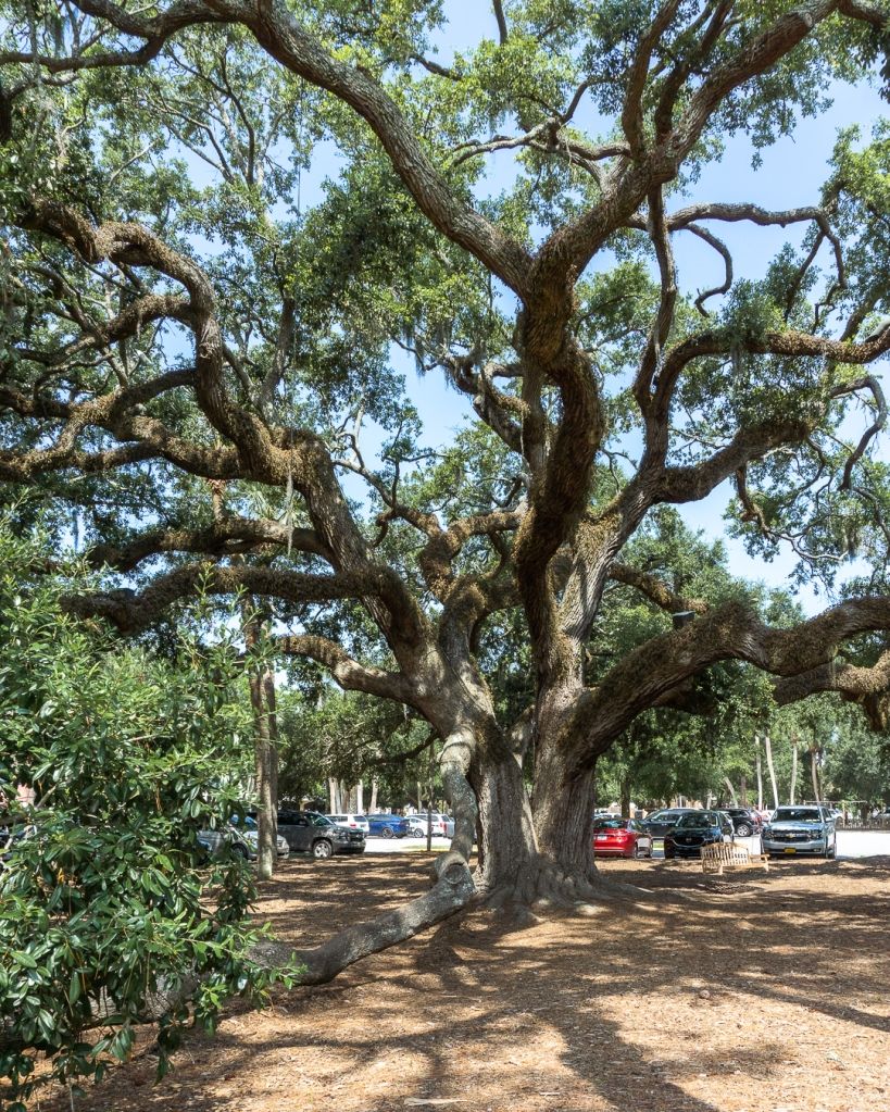 South Carolina oaks, lowcountry vacation photography, Hilton Head
