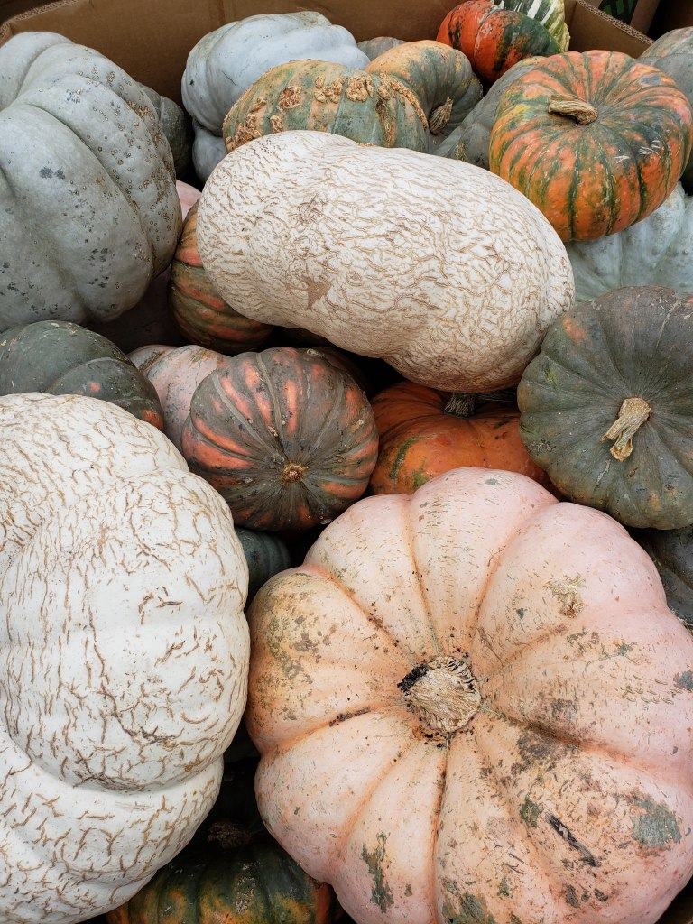 Fall Activities, pumpkins