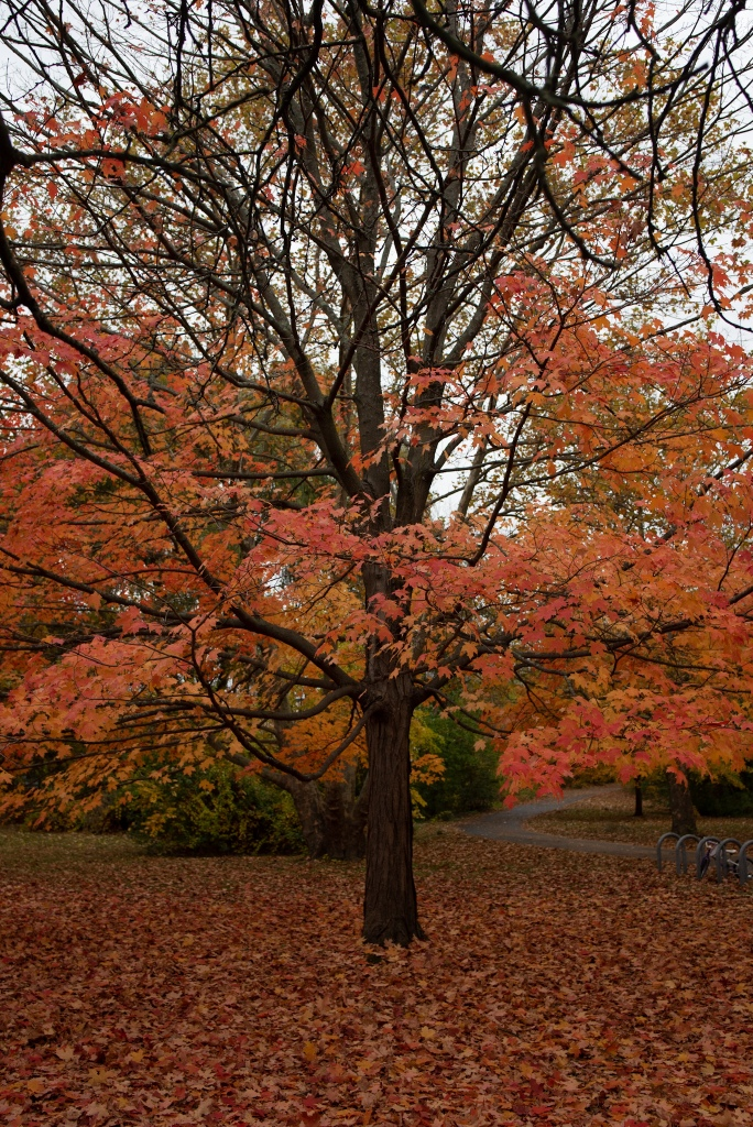New England Fall Foliage, Fall Photography