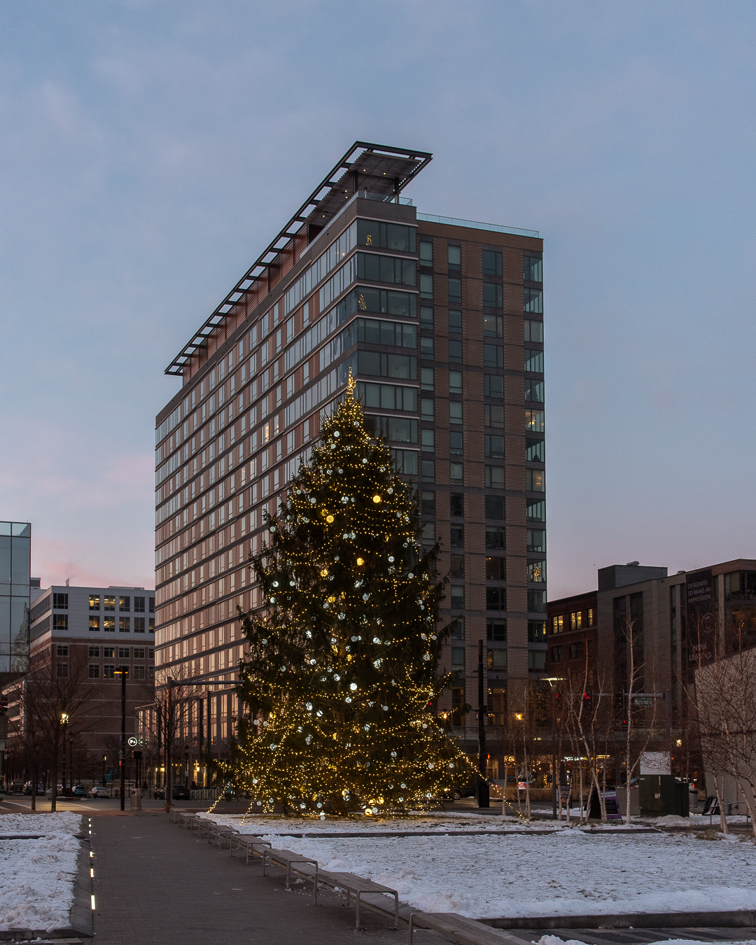 Christmas trees in Boston, holiday season